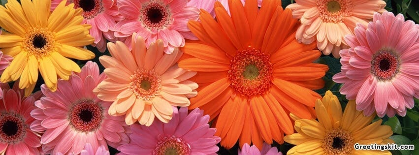 Beautiful Flowers FB Cover Image