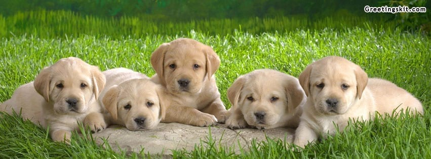 00-Cute-Puppies-FB-Timeline-Cover