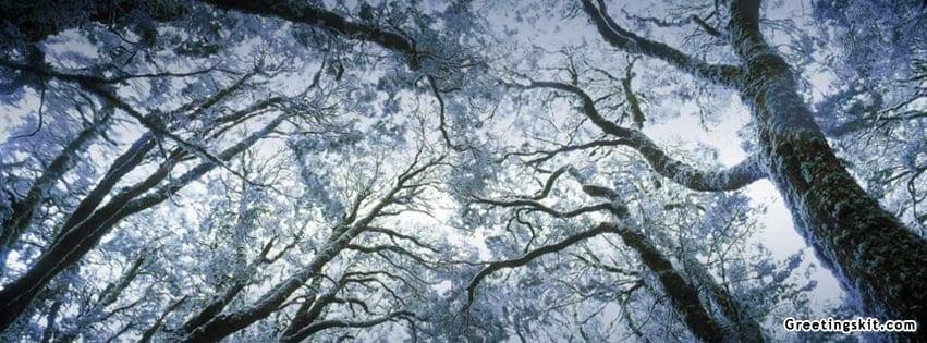 00-Myrtle-Forest-Tasmania-FB-Timeline-Cover