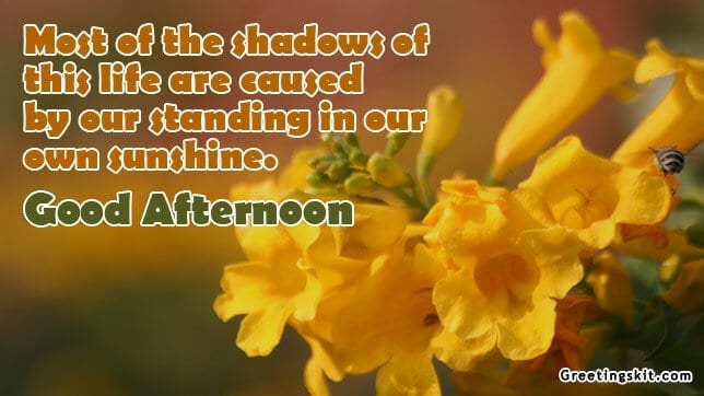 Our Own Sunshine – Good Afternoon