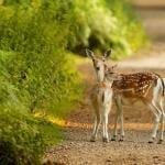 Beautiful Deer FB Timeline Cover Photo
