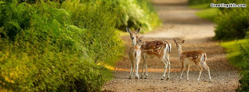 0000000-beautiful-deer-facebook-timeline-covers