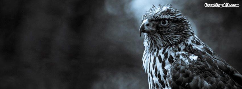 Eagle Facebook Cover