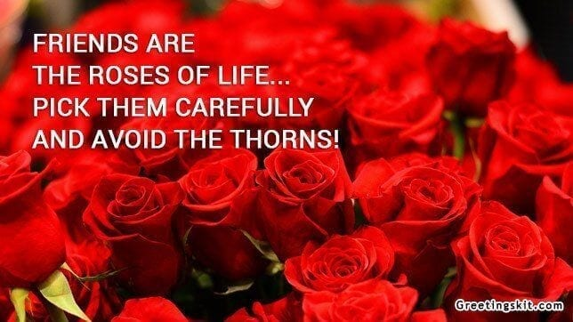 Friends are the Roses – Picture Quote