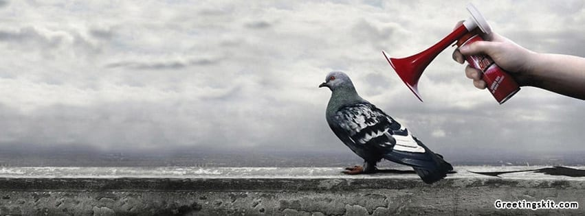 Air Horn Vs Pidgeon Facebook Cover