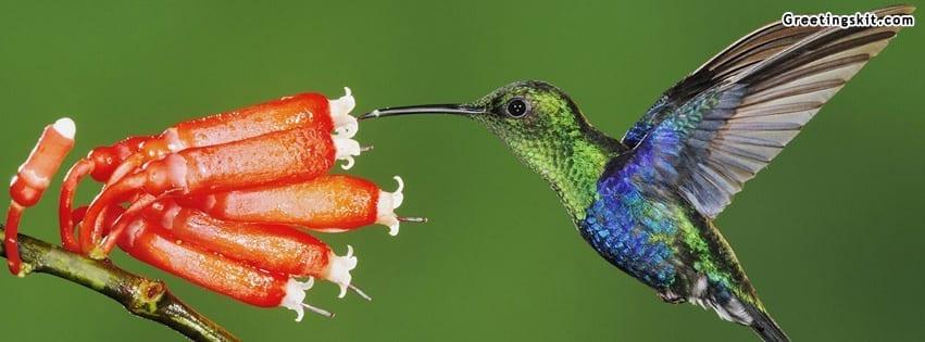 Beautiful Hummingbird Facebook Timeline Cover