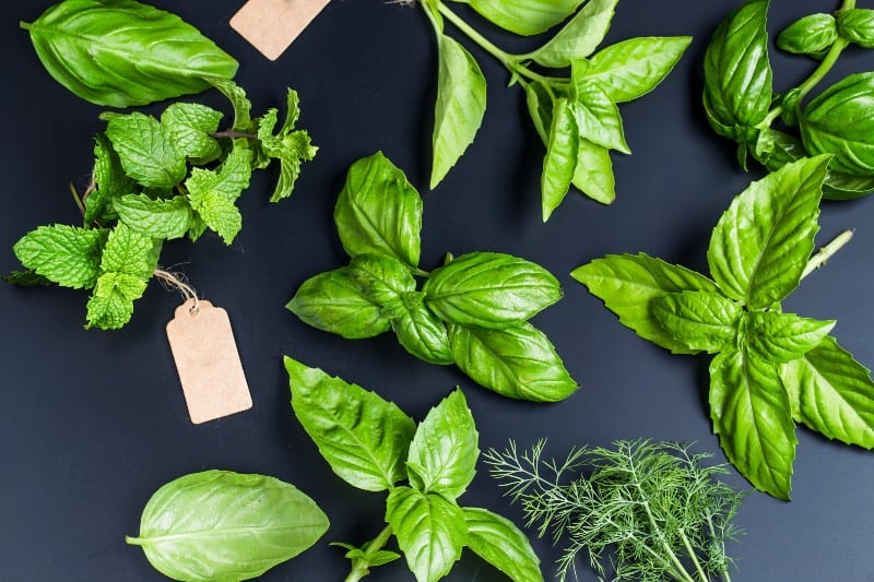 10 Useful Herbs You Can Grow Indoors in Water