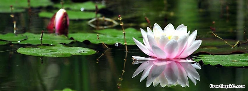lotus facebook covers. lotus. get free image about wiring diagram, Beautiful flower