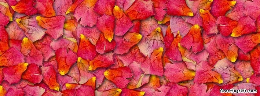 Rose Petals Facebook Timeline Cover